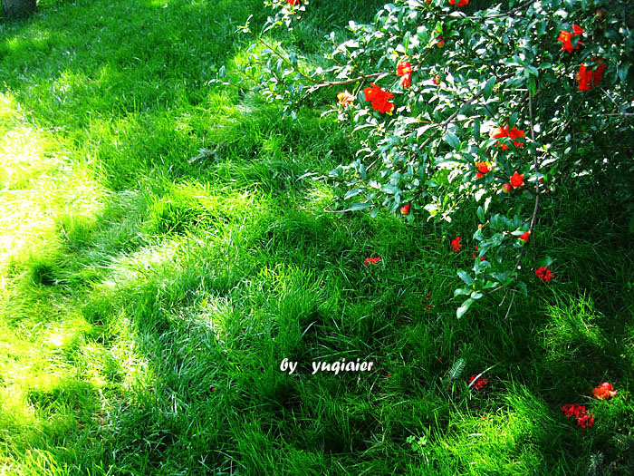 后来终于在阳光照耀的石榴树下