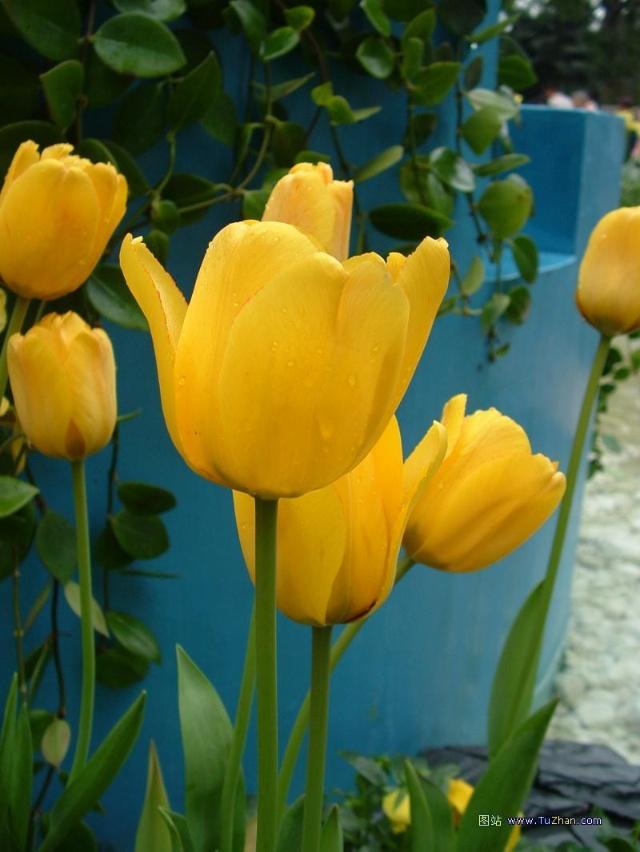 赏花要懂花语,花语构成花卉文 -麒麟花卉图片大全图 花卉图片及名