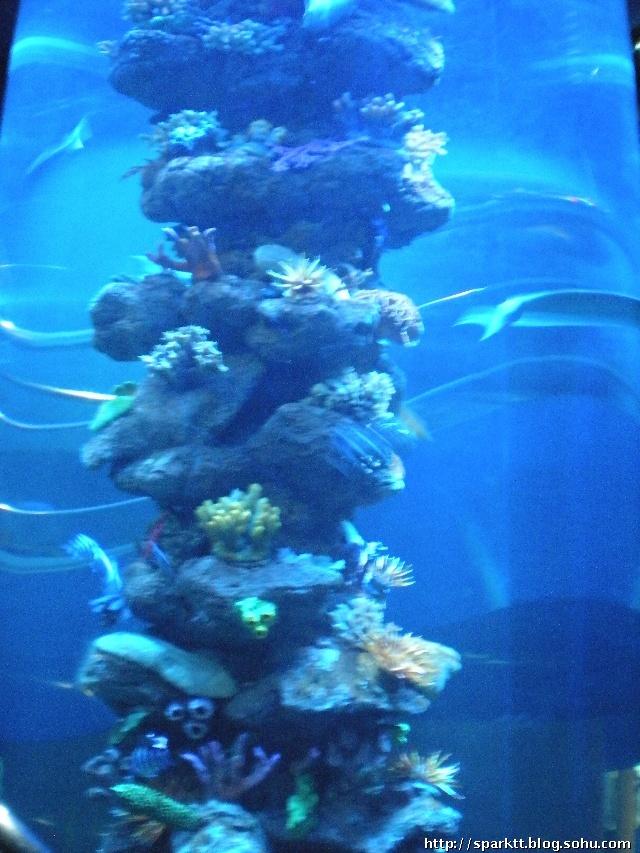 壁纸 海底 海底世界 海洋馆 水族馆 桌面 640_853 竖版 竖屏 手机