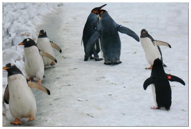 动物 企鹅 640_432
