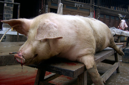 面猪的捏法步骤图片