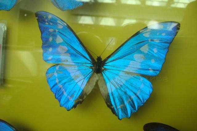 春天来了 大地暖了 蓝蝴蝶飞来了 你是否会